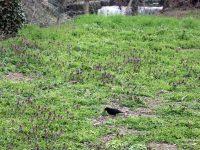 Община Плевен започва от днес обработка срещу кърлежи и комари