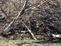 """От днес затварят друга част от ул. """"Гривишко шосе"""" заради обезопасяване на дървета"""