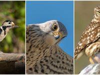 11 проверки за птици в безпомощно състояние са извършили през юни плевенските екоинспектори